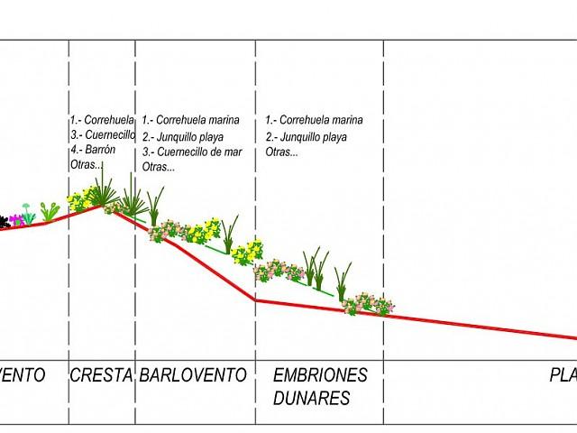 Sección proyectada con identificación de especies a revegetar